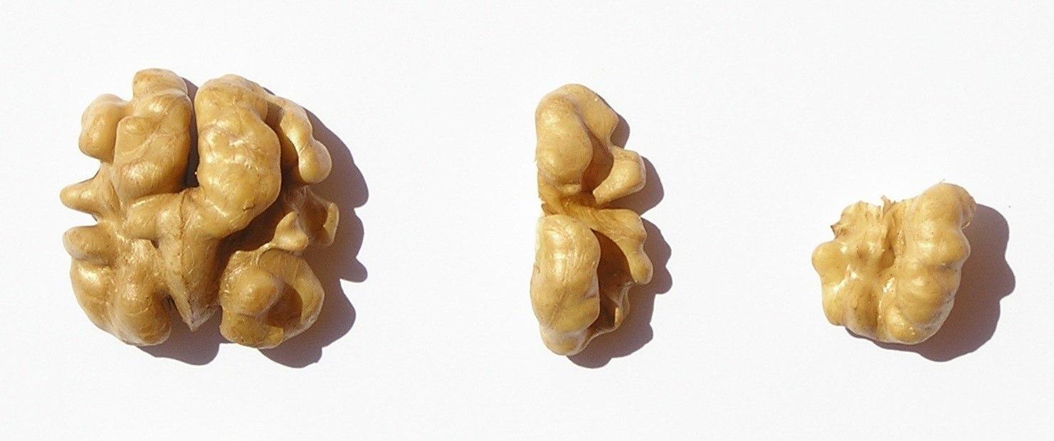Sekané vlašské orechy rôznych veľkostí